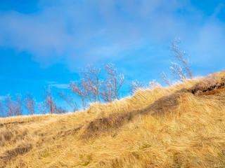 Leafless tree on field in Iceland