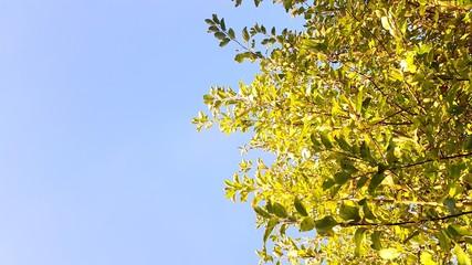 Apfelbaum von Unten