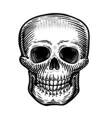 Human skull, sketch. Hand-drawn skeleton, zombie or dead. Vintage vector illustration