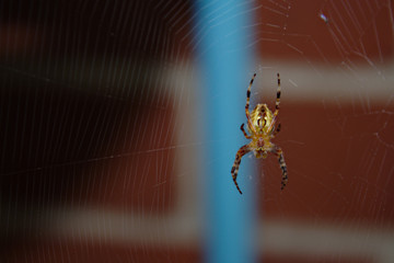 Close Up of Orange and Brown Spider Hanging on Web Against a Brick Building