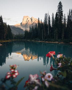 Emerald Lake Flowers