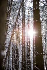 Winter Trees 07