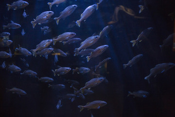 School of coral reef fish