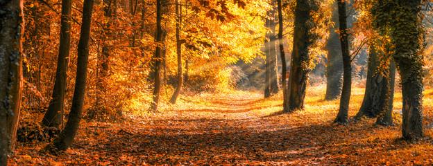 Foto auf Leinwand Ziegel Wald Panorama im goldenen Herbst