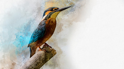 Common Kingfisher - painted with watercolor. Bird illustration.
