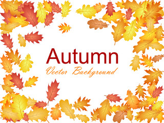 Autumn vector background with oak leaf frame or border illustration on white background. Autumn leaves falling, foliage seasonal image. Red, yellow, orange and brown dry oak tree leaves background.