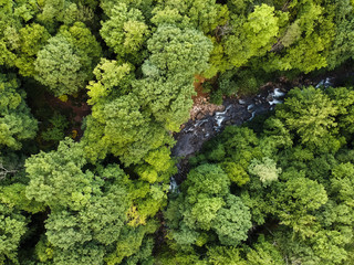 Aerial view of river flowing amidst trees in Pisgah National Forest