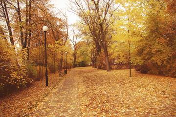 golden autumn landscape full of fallen leaves in the park