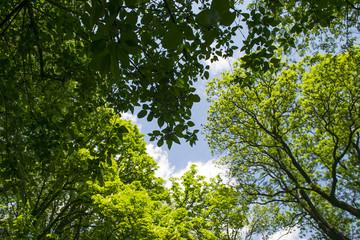 Treetops framing the sunny blue sky  Wall mural