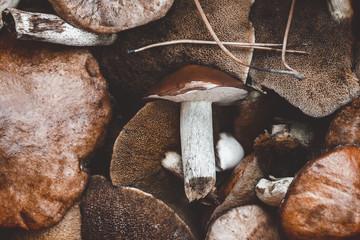 Close-up of fresh mushrooms