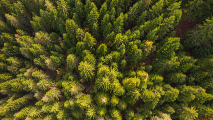 A fresh green pine forest shot in the spring with a dron from the air. UNUSABLE MOUNTAIN LANDSCAPE BY BULGARIA from above