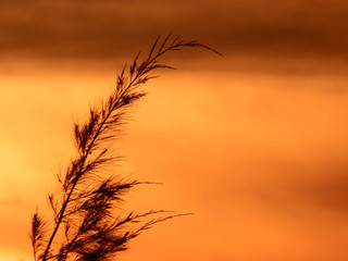 The tip of a delicate pine tree silhouetted against a bright orange sunset sky background.