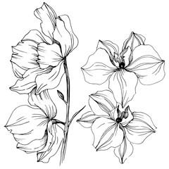 Vector orchid flower. Floral botanical flower. Isolated illustration element. Aquarelle wildflower for background, texture, wrapper pattern, frame or border.
