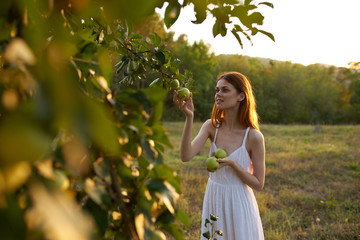 young woman in a white dress picking apples from a tree garden