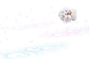 Fototapete - 桜と流水の背景(白と薄いピンクのイメージ)