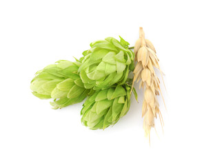 Fresh green hops and wheat spike on white background. Beer production