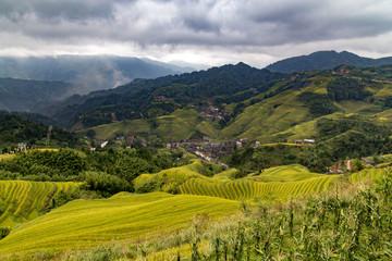 Terraces rice