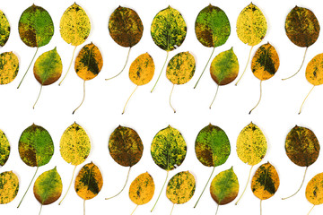 autumn leaves of a pear