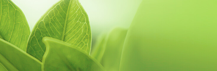 blur background,nature leaf banner Size pattern,Closeup nature view of green leaf on blurred greenery background in garden with copy space using as background