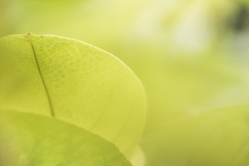 nature view of green leaves under the sun. Natural green tree used as background, blur or wallpaper.
