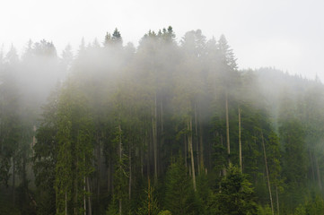 .fog in the trees, in the forest, sunset, dawn, overcast, nature, paddling