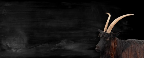 Bock vor Tafel Hintergrund