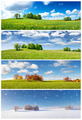 Wall Mural - Beautiful trees in four seasons landscape on the field. Spring, summer, autumn and winter collage