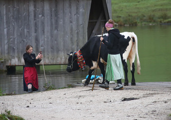 Bavarian farmers take a picture before they load their cows on a boat for a transport over the picturesque Lake Koenigssee