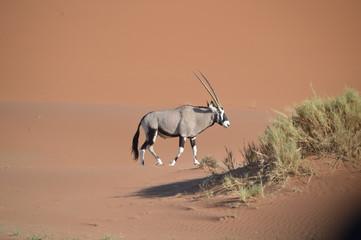 Wall Murals Antelope Oryx dans le dunes, Namibie