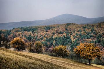 Kalnica Slovakia