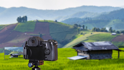 Digital camera on paddy field background 2