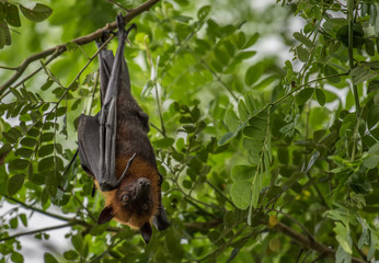 Bats lying on the tree