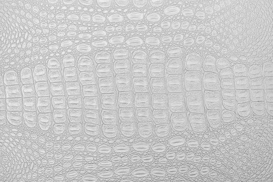 Monochrome crocodile leather texture.