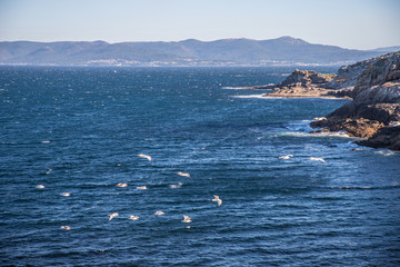Flying seagulls at the atlantic coast of Spain