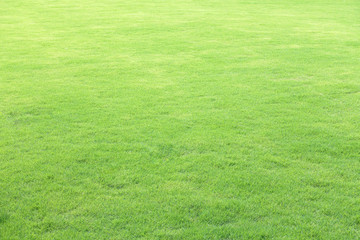 Green field at the public park