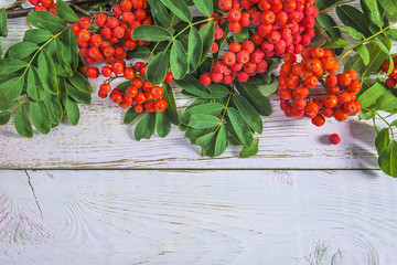 Red rowanberries with leaves on white paint background with copy space