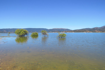 Lago del Coghinas with trees standing the blue water of the lake, Sardinia, Italy