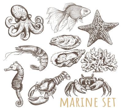 Marine animals collection illustration