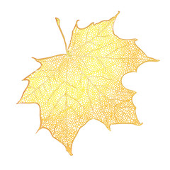 Yellow maple leaf isolated on white background. Detailed vector illustration of hand drawn autumn leaf. Vintage retro fall seasonal decor.