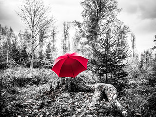 Black and white image of a red umbrella on a trunk