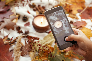 Hand holding phone and taking photo of stylish autumn flat lay of fall leaves, candle, berries, nuts, acorns,cotton on soft white background. Modern mobile photography. Instagram blogging