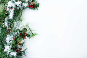 Snow covered Christmas tree branches on left side of solid white background