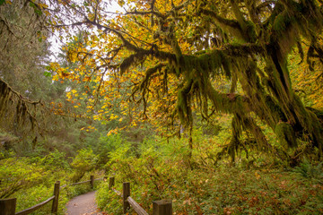 pacific northwest trees and wildlife