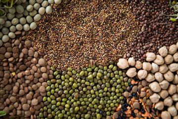 Dried Seeds for Sprouts