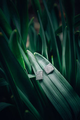 Earrings in Plant Product Styled Photography
