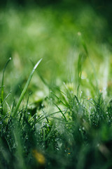 Morning Dew Bokeh of Grass