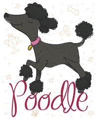 Elegant Female Poodle Posing for the Pet Contest, Vector Illustration