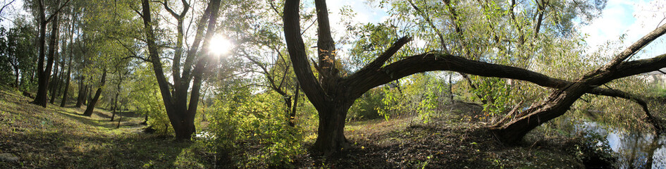 Panoramic view of old park with large deciduous trees. Early autumn landscape