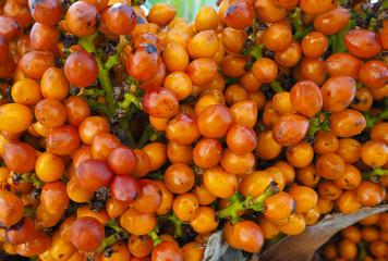ripe orange berries (fruits) palm trees, close-up texture