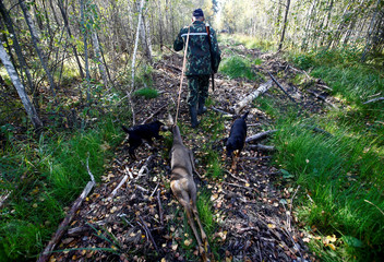Belarusian hunter drags a killed roe deer as he takes part in a hunting on wild ungulates near the village of Myshanka